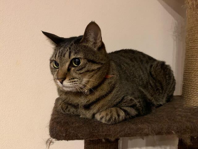 【#3】家の猫の話。