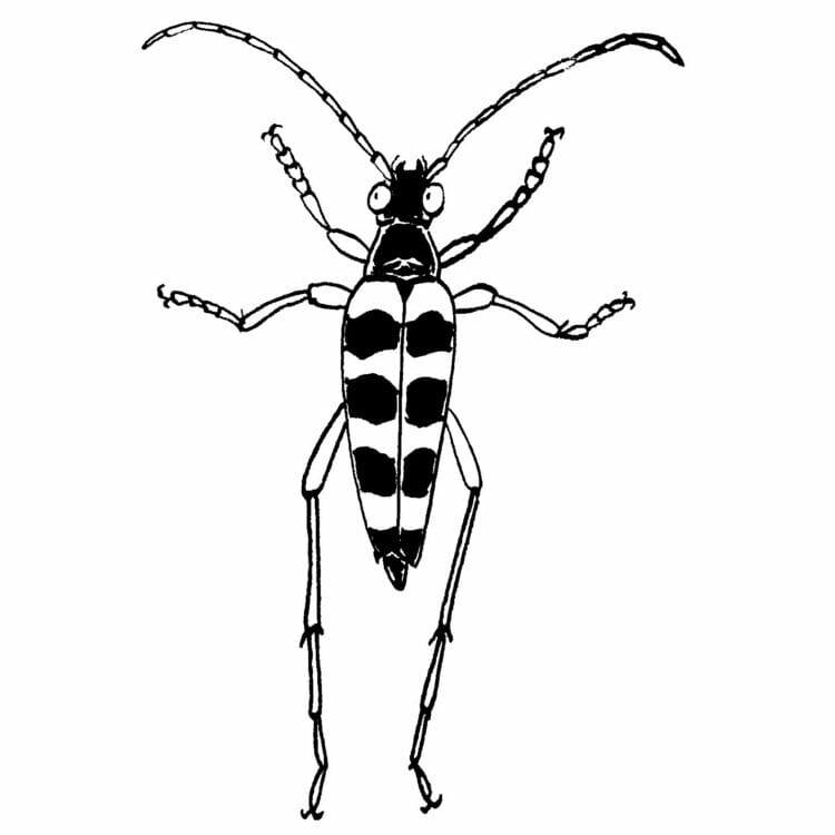 [前編]養老孟司さんの昆虫観察記は驚くほどエキサイティングだった。