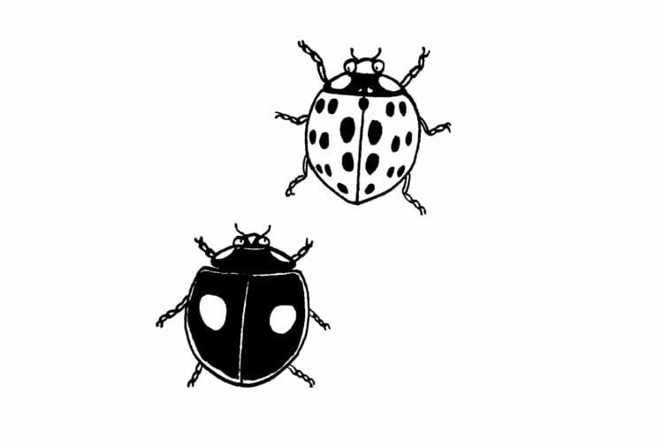 [中編]養老孟司さんの昆虫観察記は驚くほどエキサイティングだった。