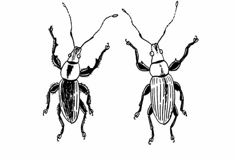 [後編]養老孟司さんの昆虫観察記は驚くほどエキサイティングだった。