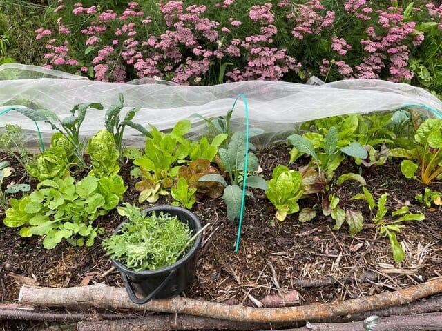 第4話: 植物を食べること。