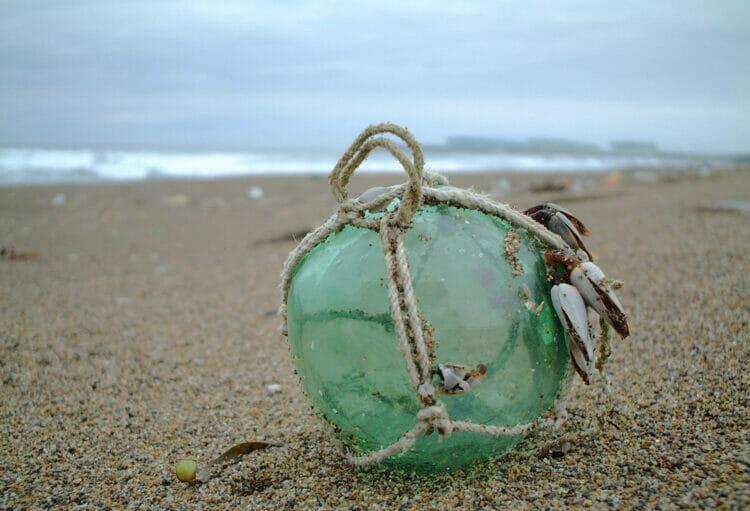 【#2】山の化石探しから、海の拾いモノへ